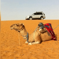 camel and 4x4 car ready to start an adventure tour from Marrakech